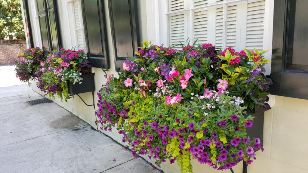 Prolific Flower Boxes