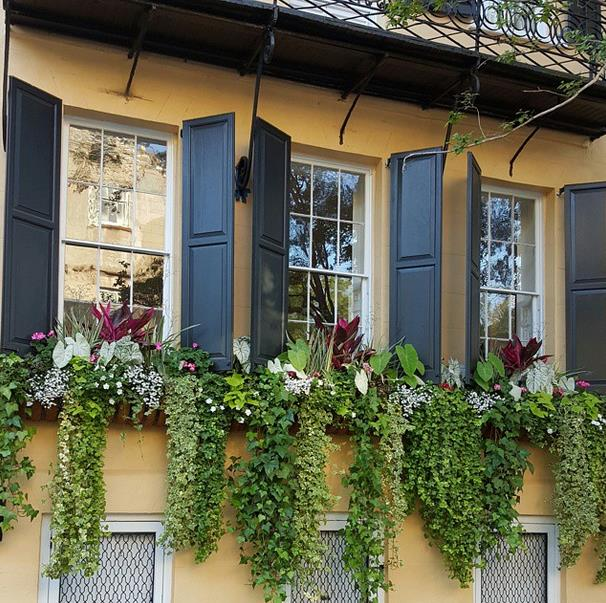 Wall of Flower Boxes